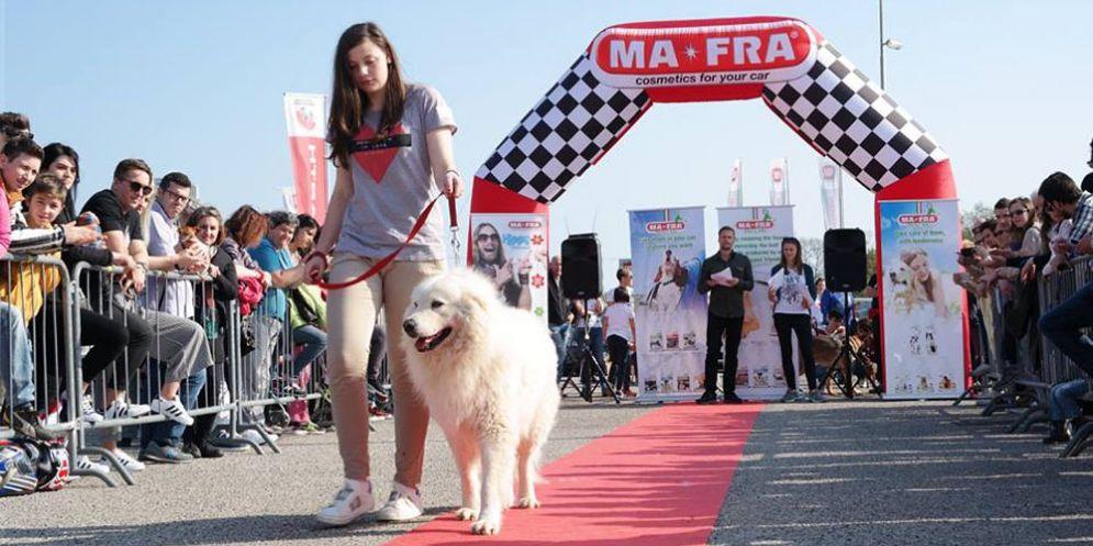 Corno di Rosazzo Dog Show: sfilata di bellezza, canina!
