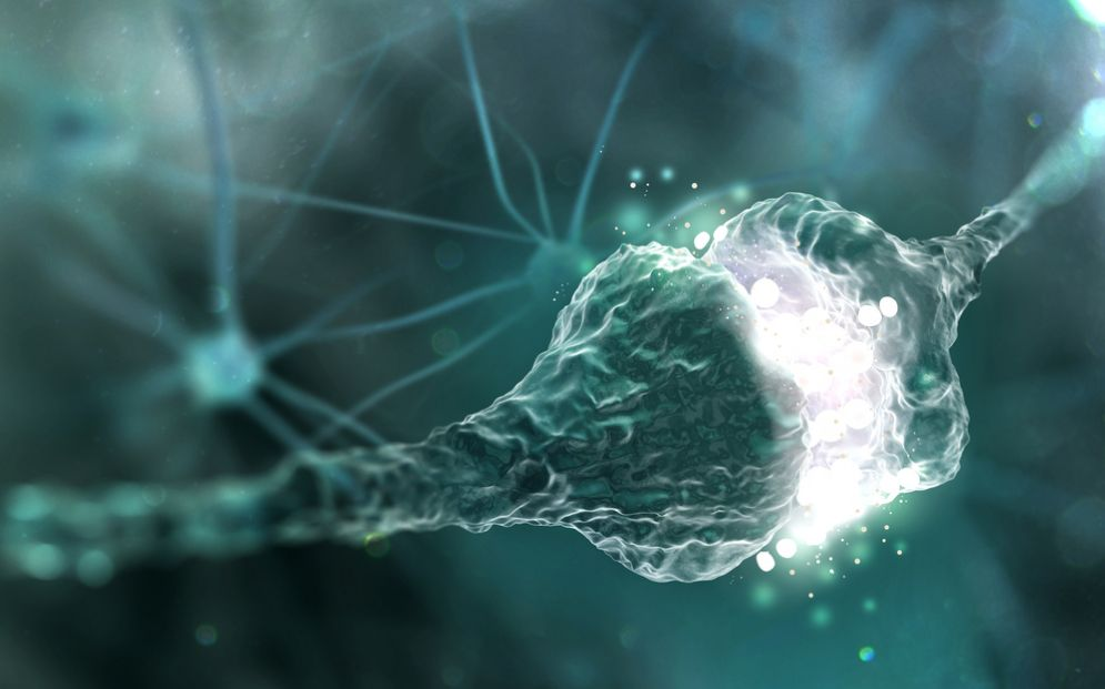 Scienziati riescono a trasferire la memoria da un essere all'altro