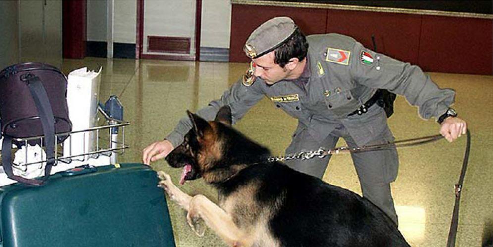 Azione di un cane antidroga della Guardia di Finanza