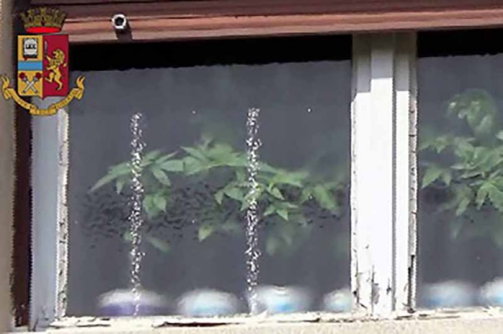 Piantine di marijuana sul davanzale della finestra: denunciato un uomo
