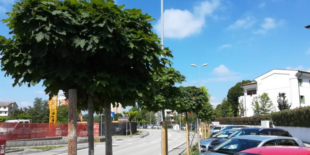 Pordenone, piantati oltre 2 mila nuovi alberi