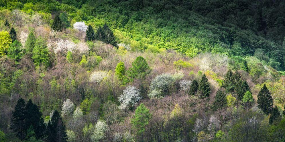 'I boschi delle fate': la magia delle Valli nelle foto di Zanfagnini