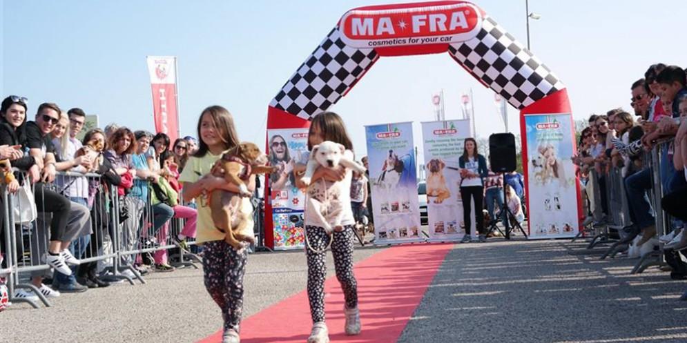 Arriva il Dog Show in Piazza della Repubblica a Monfalcone
