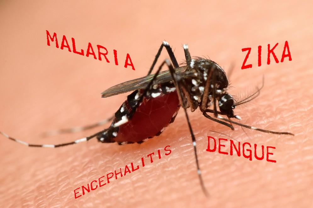 Una nuova malattia trasmessa dalle zanzare?