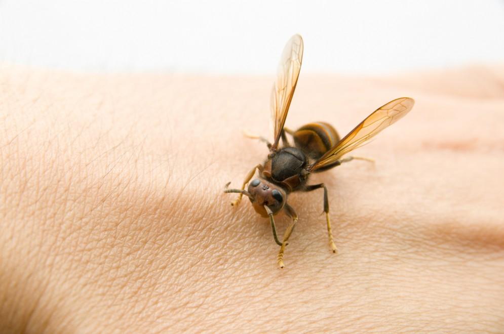 Primo soccorso in caso di puntura di ape, vespa e calabrone