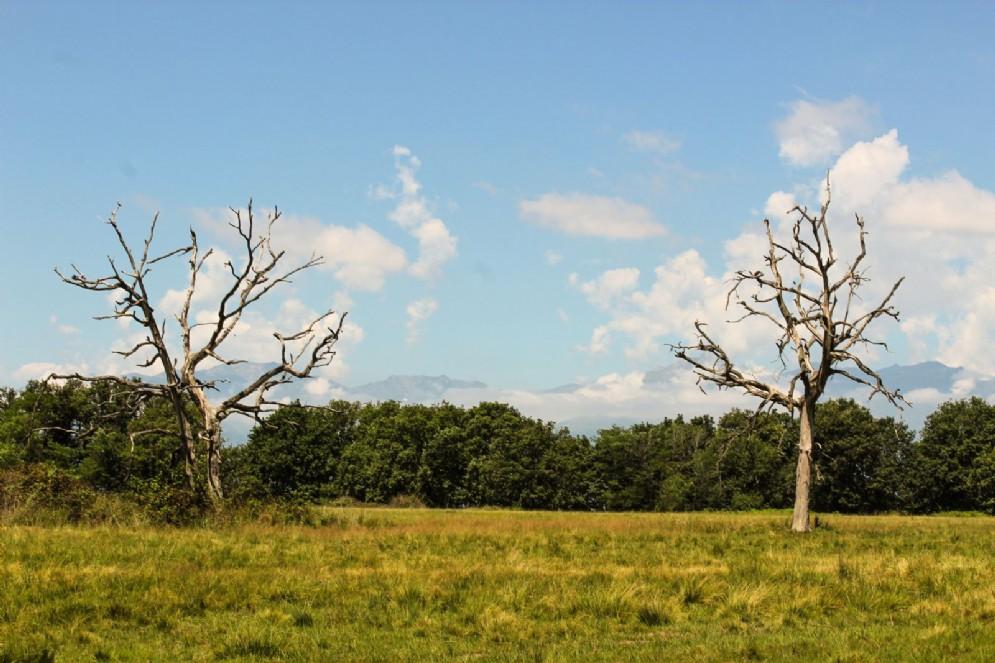 Dominano il tutto imponeni alberi di alto fusto più o meno isolati