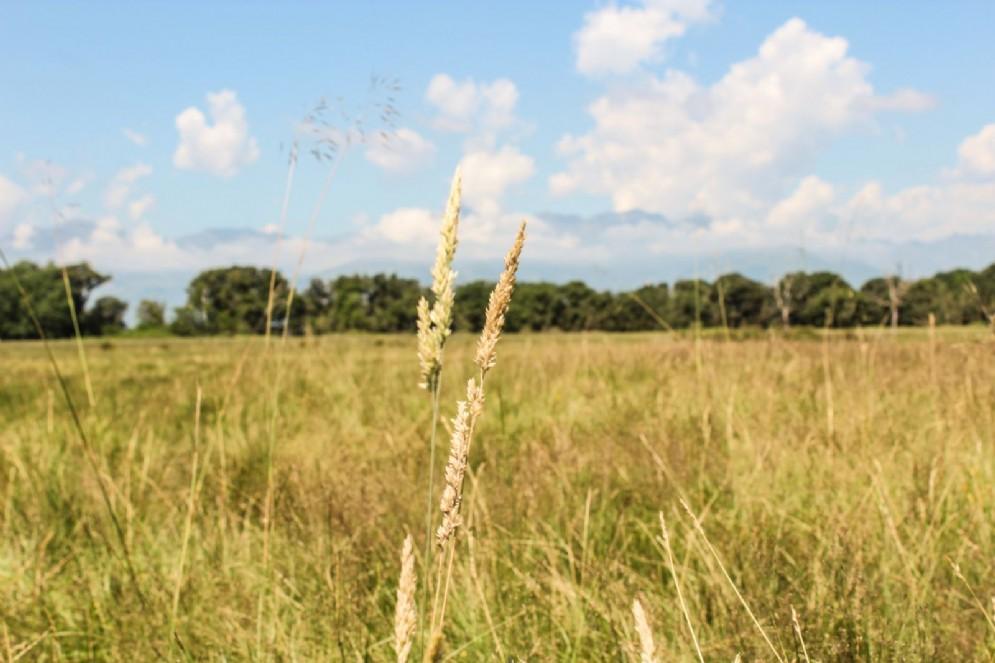 La vegetazione tipica dell'ambiente baraggivo è costituita da praterie e brughiere a prevalenza di alte erbe