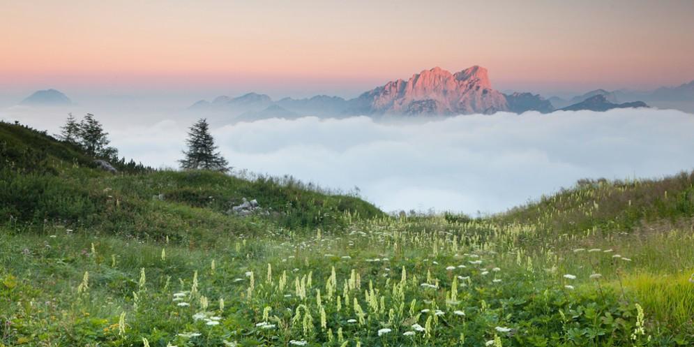 Alla scoperta della flora e della fauna della Riserva naturale della Val Alba