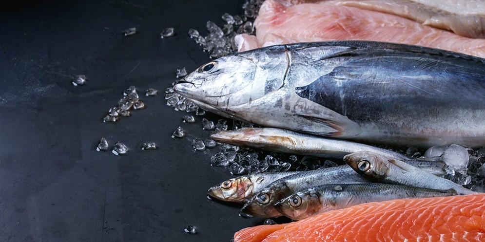 Sequestrati oltre 300 kg di pesce in un ristorante della Bassa Friulana