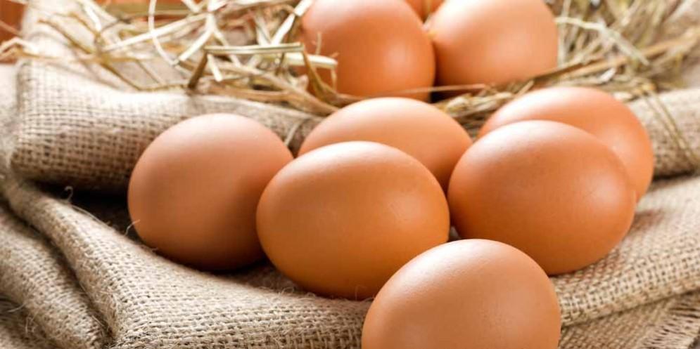 Le uova bio della friulana Pascolo a Unomattina, su Rai 1