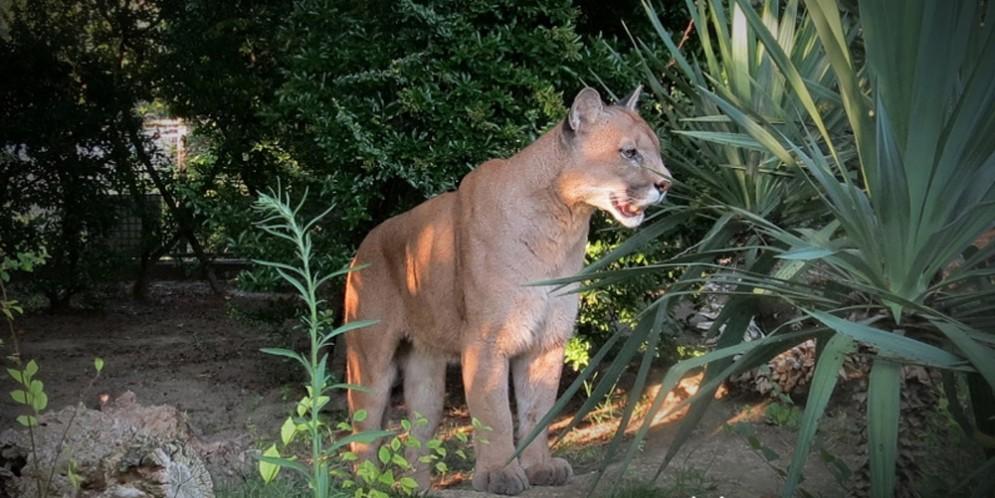 Allo Zoo lignanese un'avvincente passeggiata all'imbrunire per ammirare gli animali