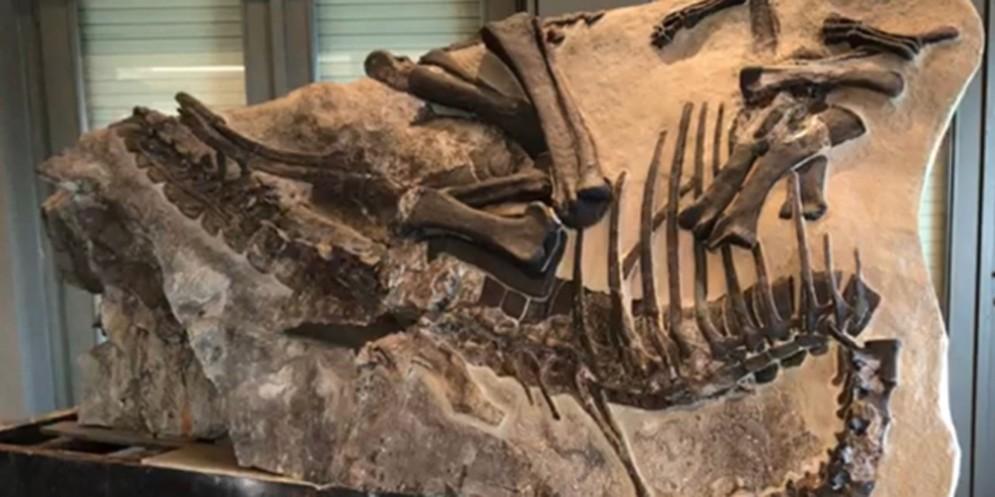 Bruno: al Villaggio del Pescatore il secondo dinosauro quasi completo
