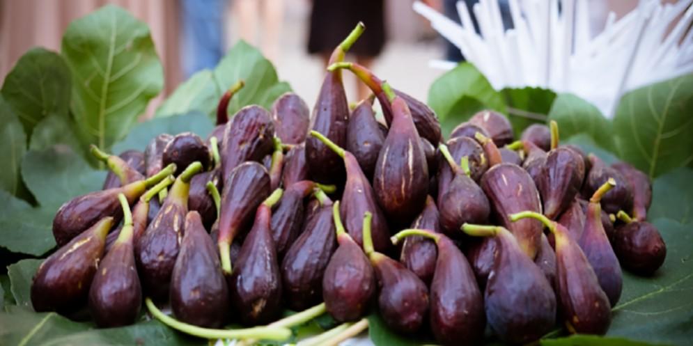Degustazione guidata col figomoro a Villa Frova