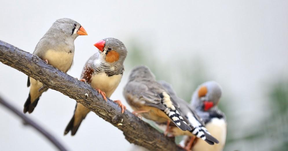 Infastidito dal cinguettio degli uccellini