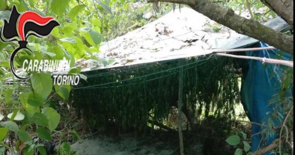 L'isola della marijuana sul Po