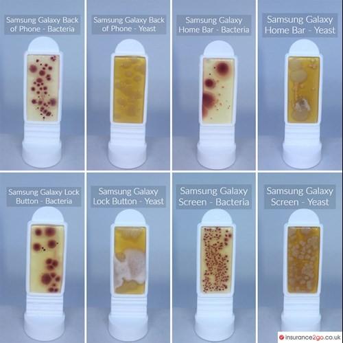 Batteri e altri agenti patogeni sul Samsung Galaxy