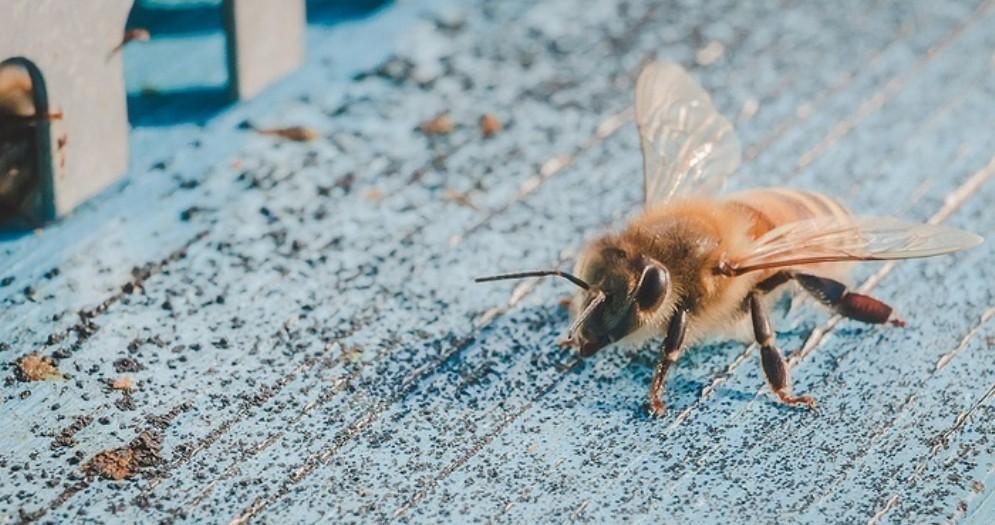 Muore per una puntura d'insetto