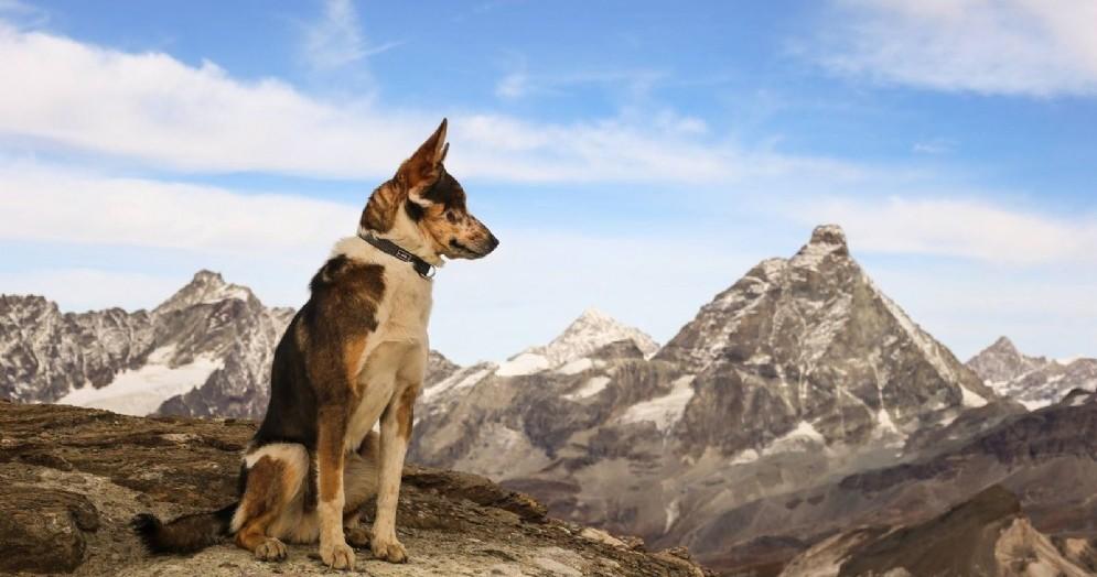 Otzi, il cane appassionato di montagne