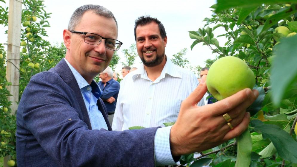 Avvio del raccolto di mele in Fvg con l'assessore Zannier