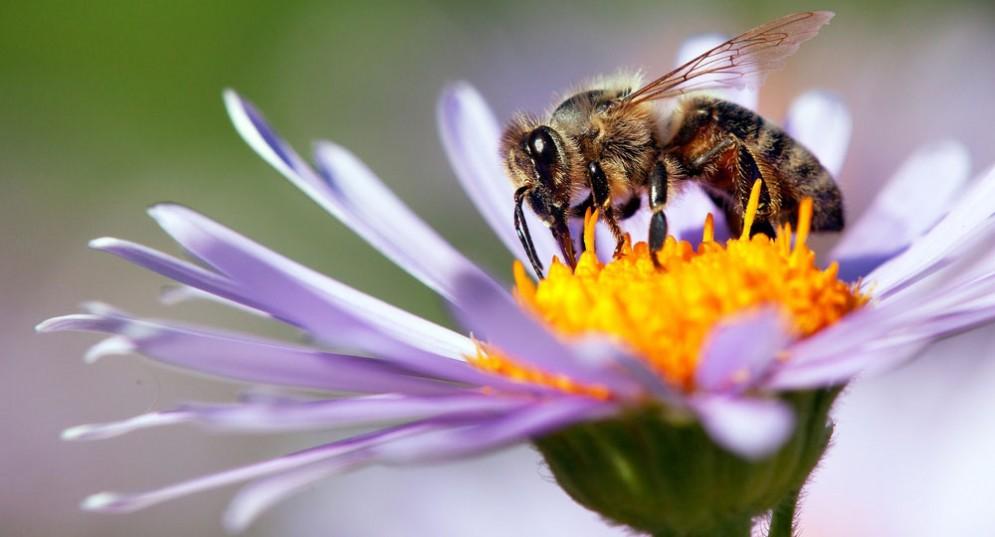 Il veleno d'api cura l'eczema