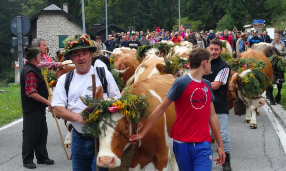 Malga Montasio chiude la stagione con la festa della transumanza