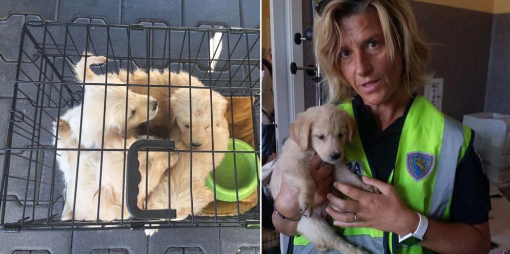 La polizia sequestra cuccioli di Golden Retriever provenienti dalla Serbia