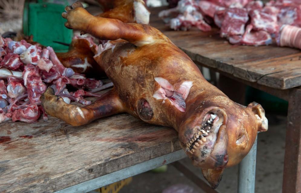 Un cane cucinato per essere mangiato