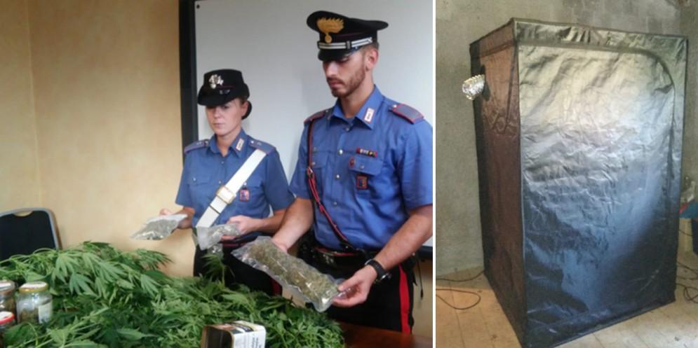 In casa aveva una serra di marijuana: in manette un 23enne