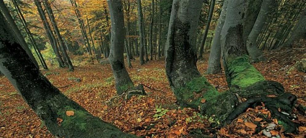 Nessuna notizia da maggio: trovato senza vita nel bosco