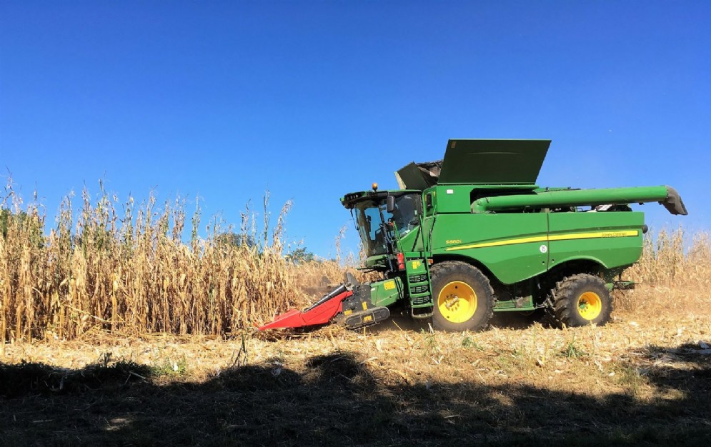 Annata positiva per i cereali: la soia 'batte' il mais