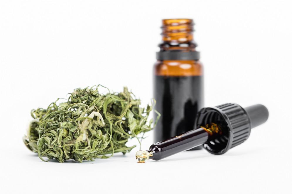 Olio di cannabis o CBD
