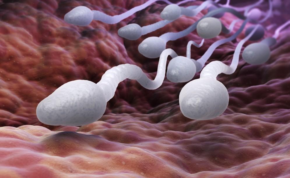 Gli abusi sessuali lasciano cicatrici nello sperma