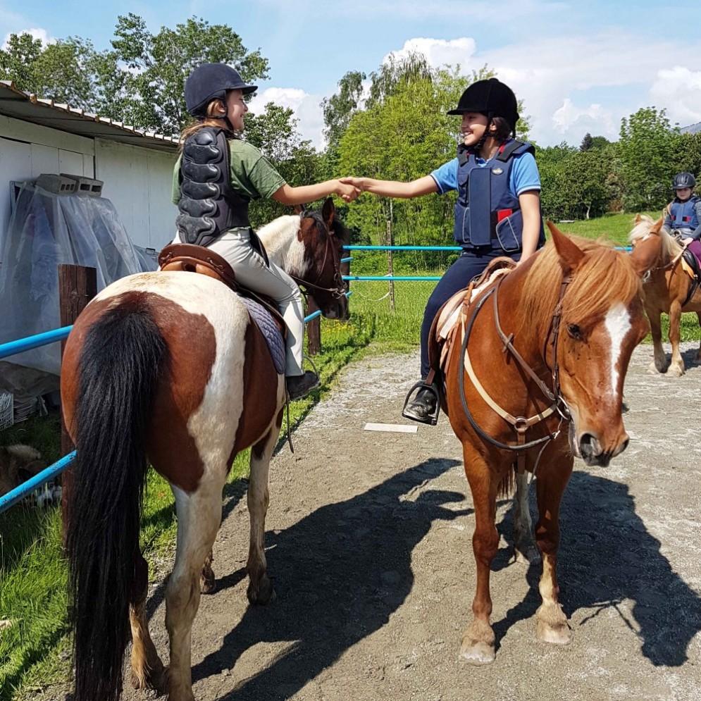 Cavalli del maneggio