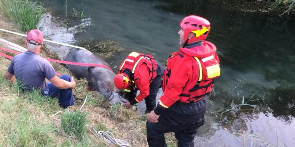 I Vigili del Fuoco salvano un cavallo caduto in un canale