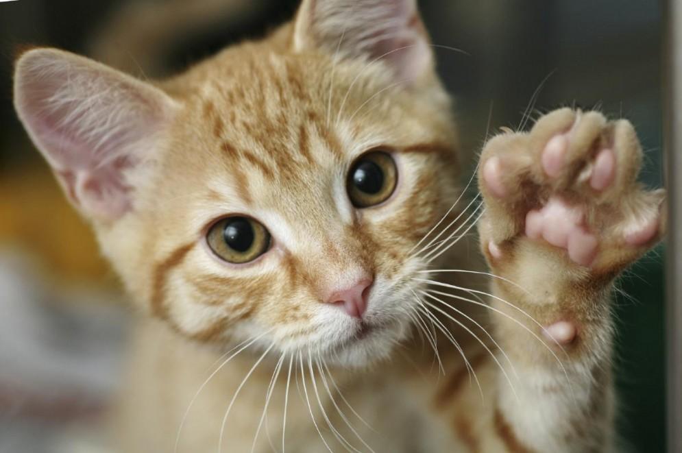 Gemona: due gatti avvelenati in pochi giorni