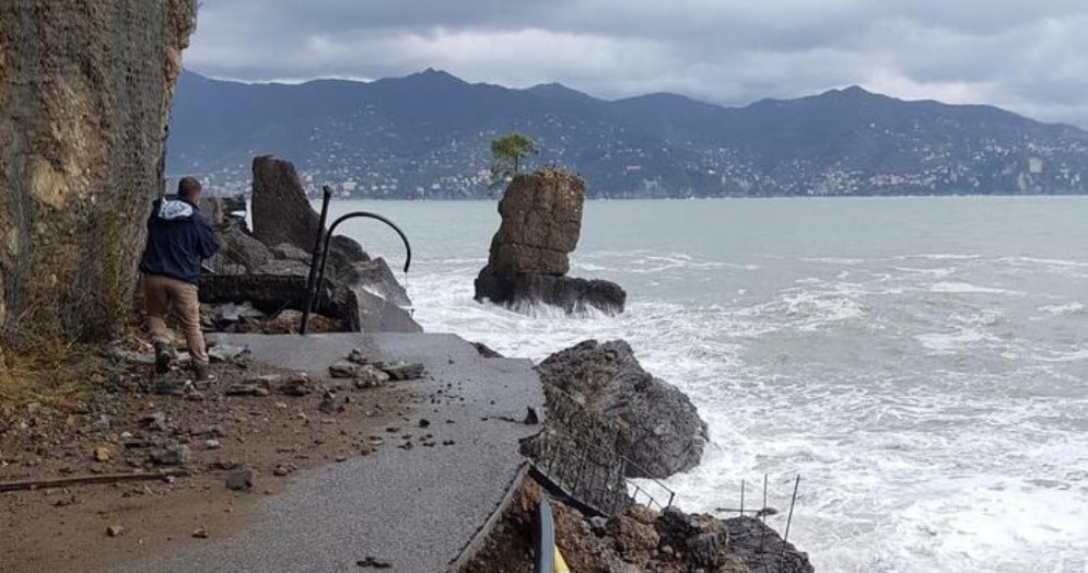 Maltempo a Portofino, il pino della «Carega» diventa un simbolo e un adesivo