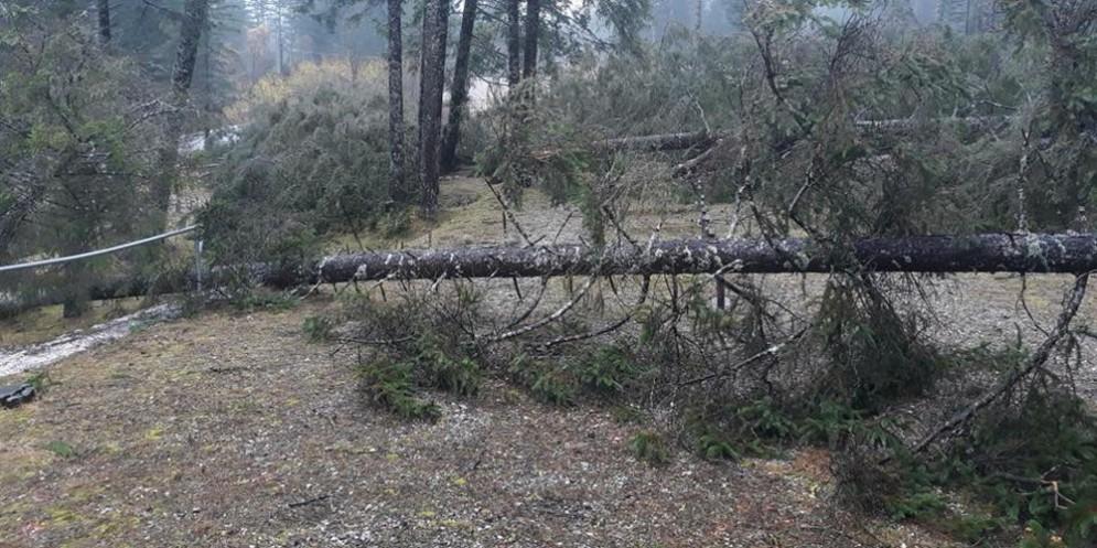 Maltempo: la foresta dei violini della Vai Saisera «è stata devastata per metà»