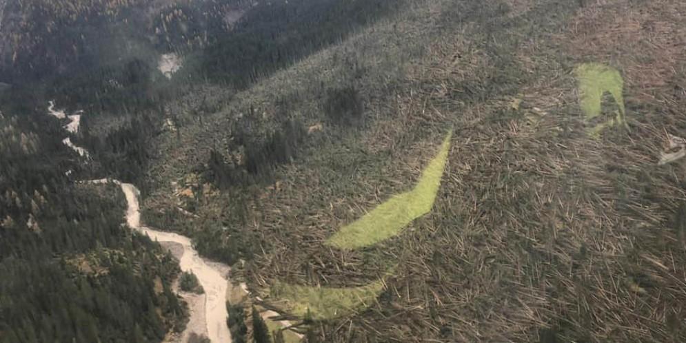 Migliaia gli alberi caduti a causa del maltempo