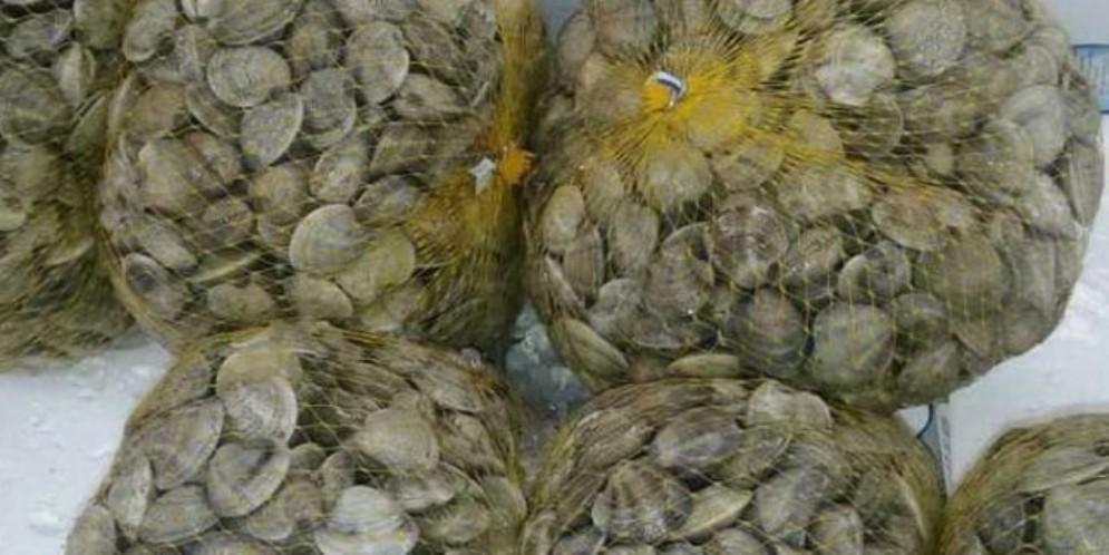 Strage di vongole e cappelunghe: pescatori di Marano, Grado e Lignano preoccupati