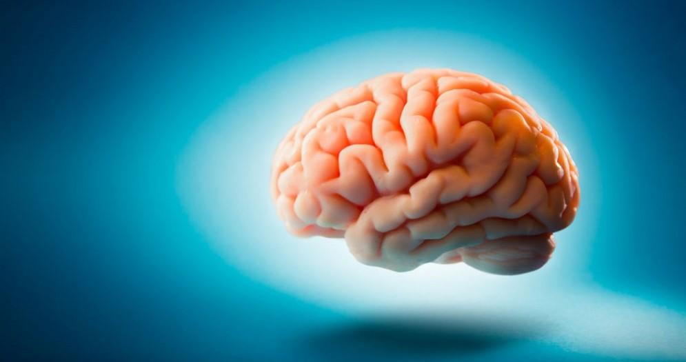 Cervello e staminali per il Parkinson