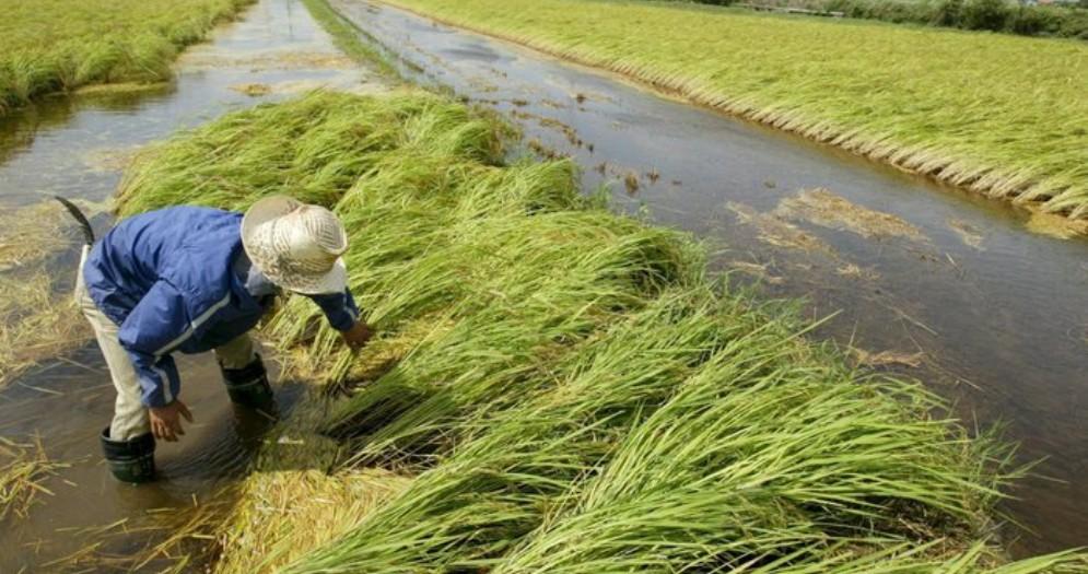 Annata agraria positiva, cresce l'export