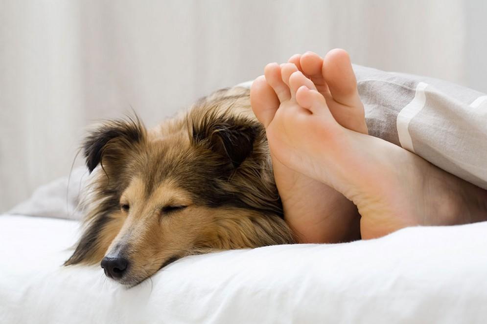 Cani e allergie