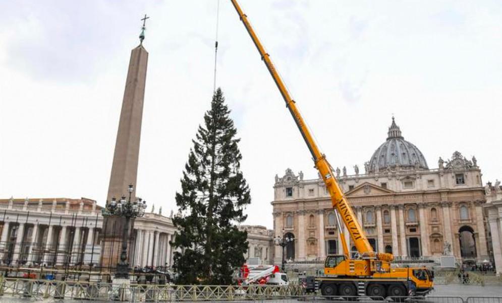 Il 7 dicembre sarà acceso l'albero donato dal Fvg a Papa Francesco