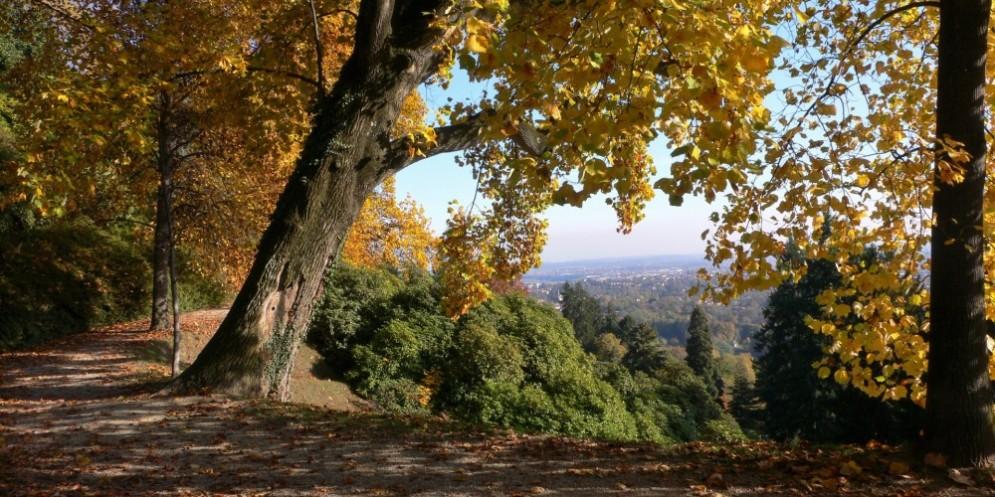 Proroga fino al 2 dicembre la mostra «Le stagioni degli alberi»