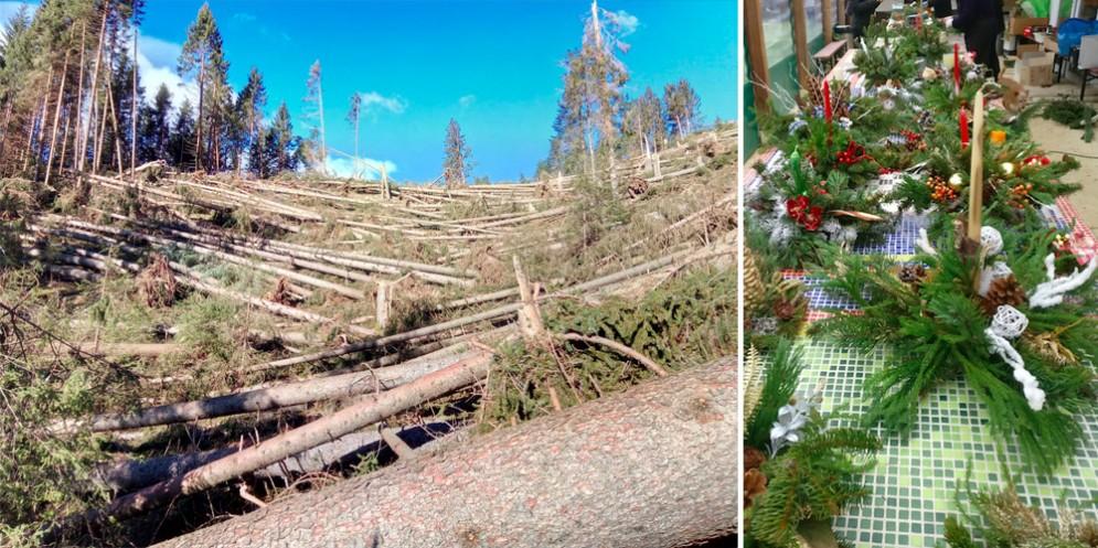 Compra una cima spezzata e crea una nuova foresta: ecco il progetto per la Carnia