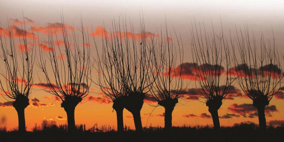 Morârs, il paesaggio friulano in mostra a Basiliano