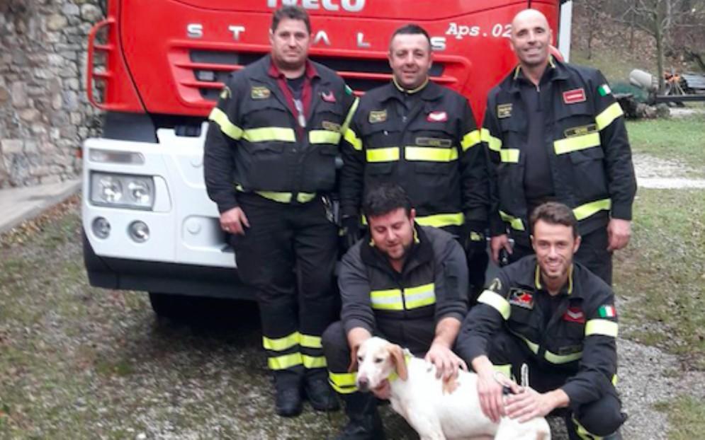 Finisce in una tana di volpi: cane da caccia salvato dai Vigili del Fuoco
