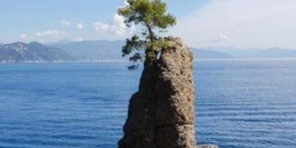 Il «pino della Carega» rischia di morire, aveva resistito alla mareggiata