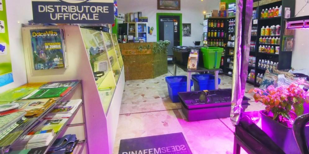 """Guida Magica Italia: anche in Fvg crescono i negozi del """"cannabusiness"""""""