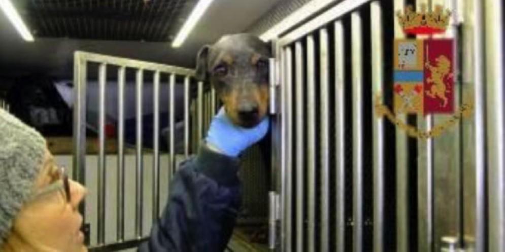 Trasporto di cani irregolare: scatta la sanzione